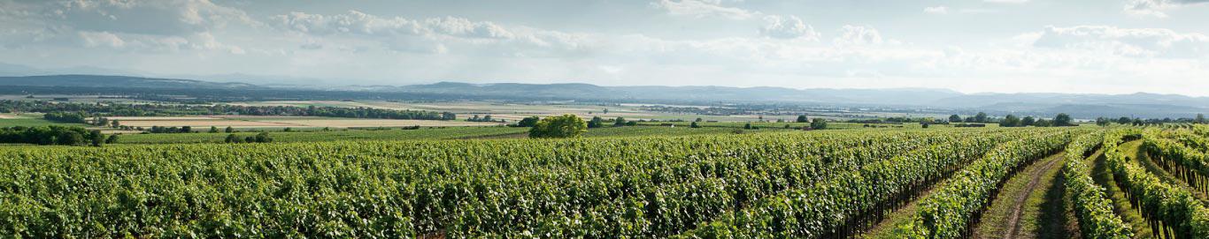 Topper onder de €25: Weingut Leth, Roter Veltliner Klassik
