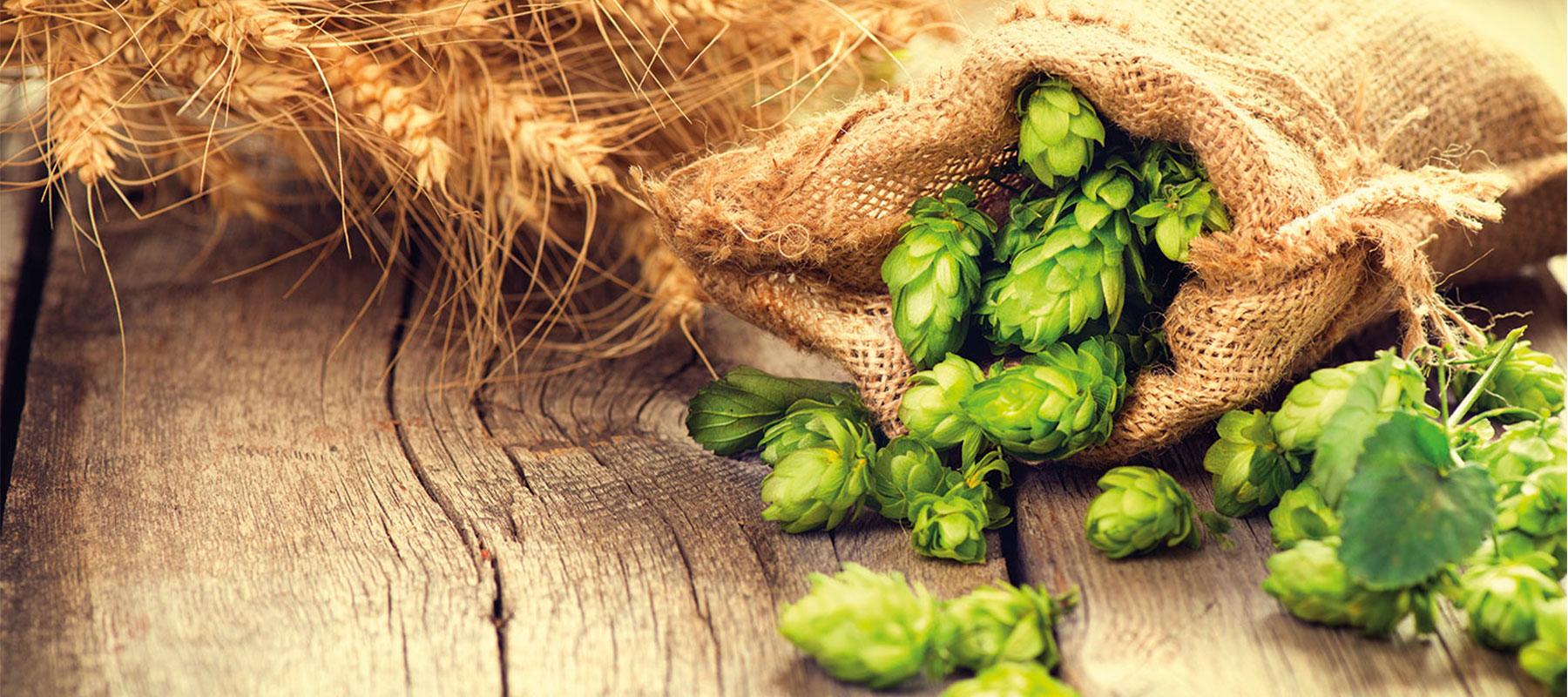 Bier van de maand juli 2020: Steenberge Pilsener