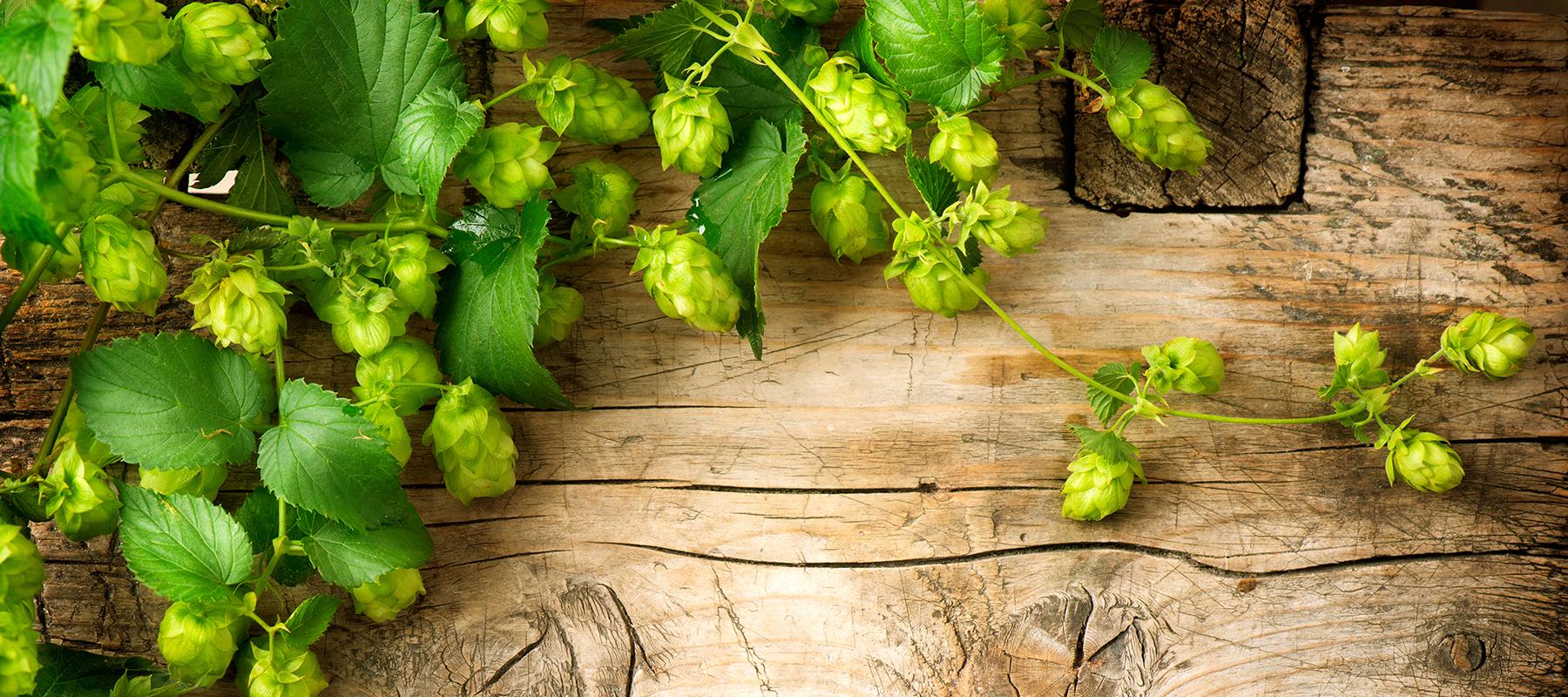 Bier van de maand juli 2021: Blanche de Namur