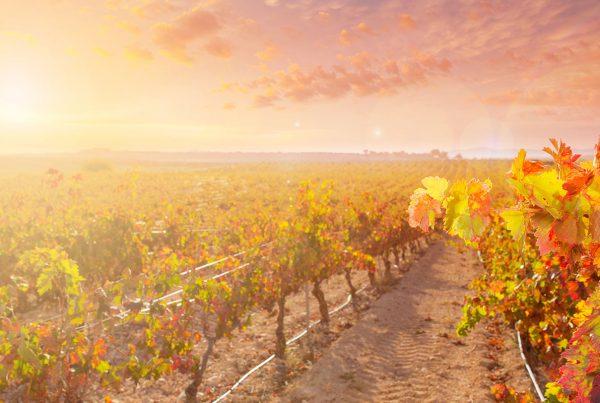 wijnvandemaand-september-header