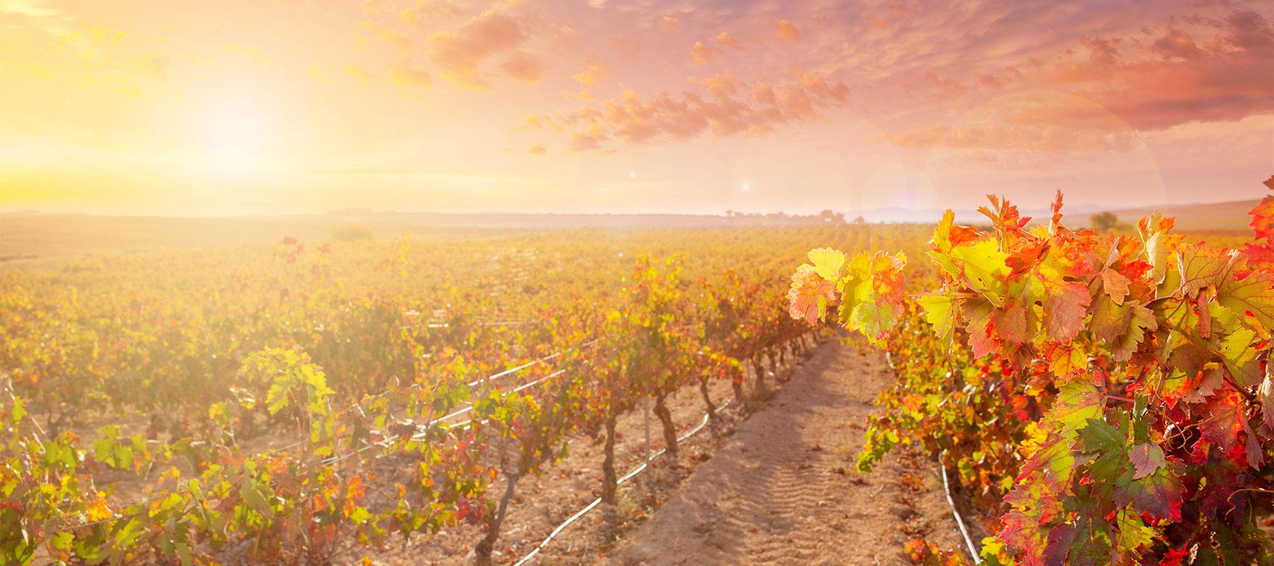 Wijn van de maand september 2019