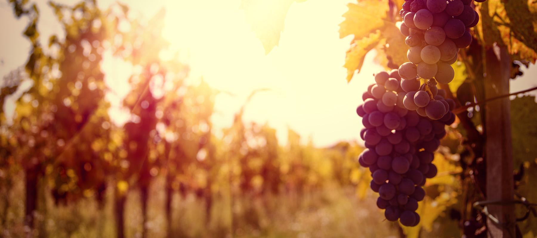 Wijn van de maand oktober 2020: Paul Mas 'Vignes de Nicole'